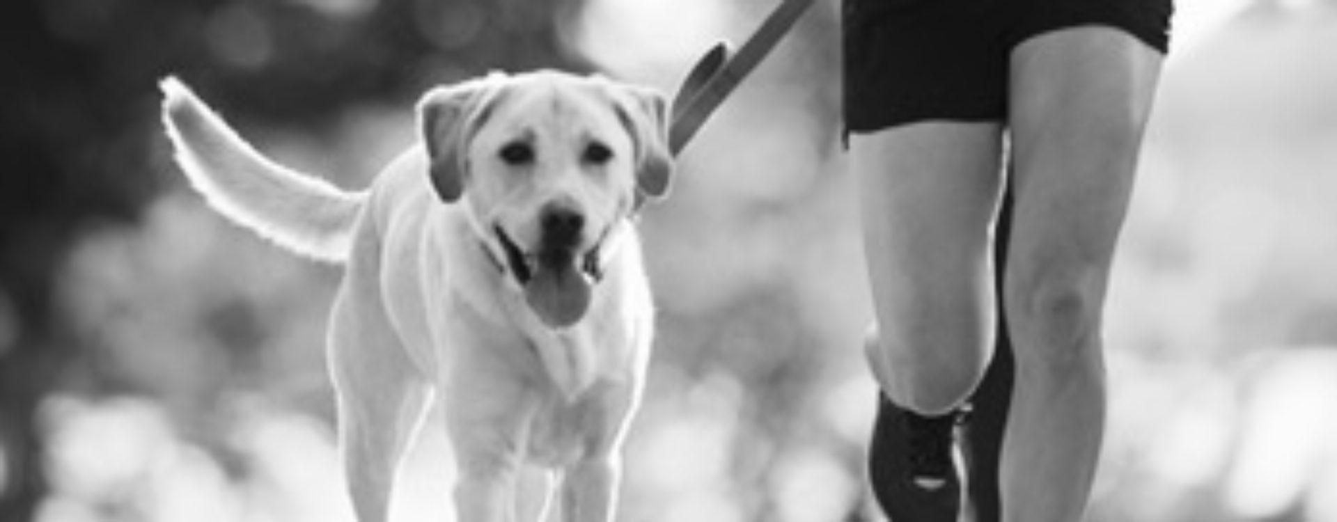 The Joyful Dog